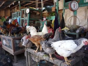 El tradicional juane desaparecería también de la mesa popular por el elevado precio de kilo de gallina
