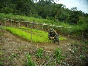 También se encontró una parcela con almácigos de coca listos para ser sembrados