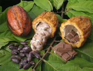 Zona es productora de cacao y plátanos