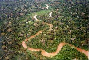exportaciones del sector forestal alcanzaron 221 millones 900 mil dólares durante 2008