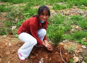 Región Junín busca reforestar ocho mil hectáreas degradadas